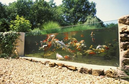 Bassin de jardin sans poisson bassin de jardin for Bassin poisson sans pompe